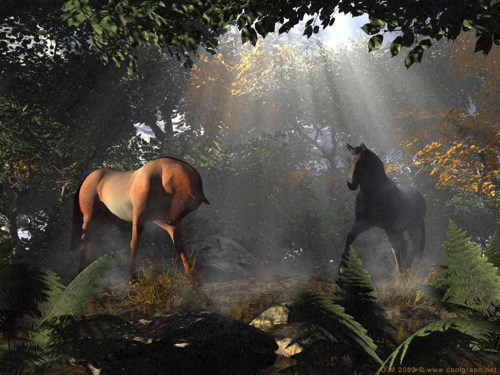 Fonds d ecrans chevaux for Dans html
